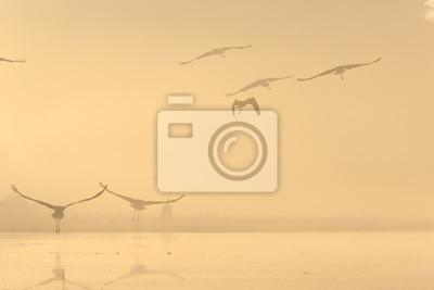 Vögel im Nebel