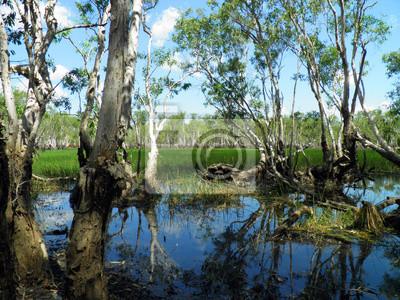 Wald im Kakadu National Park