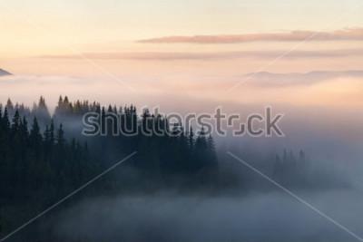 Poster Wald in den Bergen mit Nebel bedeckt