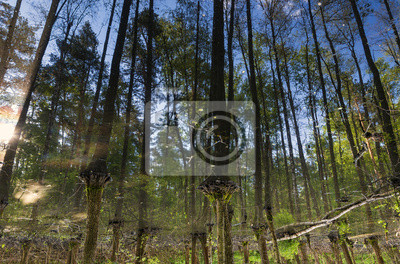 Wald spiegelt sich im Wasser auf den Kopf