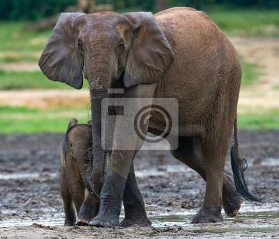 Waldelefanten mit einem Baby. Jungle.