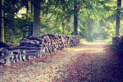 Poster Wanderweg in den herbstlichen Wald