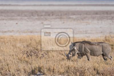 Warzenschwein, das entlang Etosha-Wanne geht
