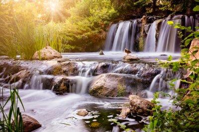 Poster Wasserfall bei Sonnenuntergang mit Mallard-Ente