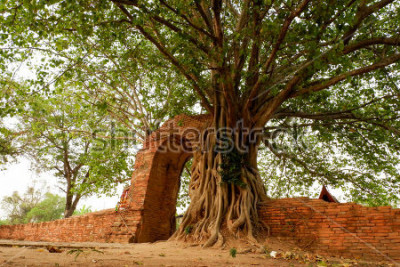 Poster Wat Phra Ngam (aufgegeben) Ayutthaya Tor der Zeit Der Bogen ist von der Pho umgeben.