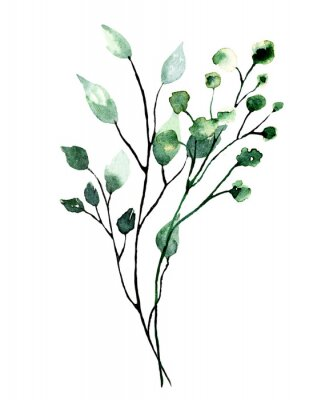 Poster Watercolor branch with green leaves. Hand painting floral illustration. Leaf, plant isolated on white background.