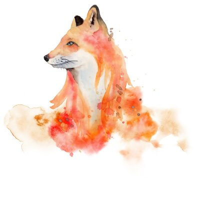 Poster Watercolor fox  Animal illustration isolated on white background.