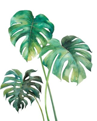 Poster Watercolor tropical leaves poster. Hand painted exotic green branches isolated on white background. Summer plants illustration