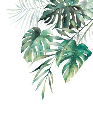 Poster Watercolor tropical leaves poster. Hand painted exotic monstera and palm green branches composition on white background. Summer plants illustration