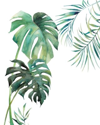 Poster Watercolor tropical leaves poster. Hand painted exotic monstera and palm green branches isolated on white background. Summer plants illustration