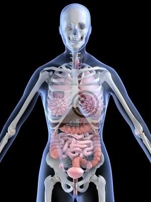 Weibliche anatomie wandposter • poster Vagina, Darm, anatomisch ...