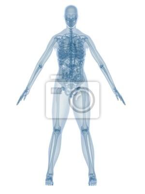 Weibliche anatomie wandposter • poster Darm, anatomisch, Schädel ...