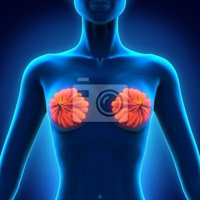 Weibliche brust anatomie wandposter • poster Lymphe, Mamma ...