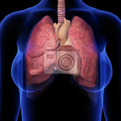Weibliche brust-x-ray mit herz-und lunge anatomie wandposter ...