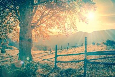 Poster Weinlese-Herbst Baum bei Sonnenuntergang mit Sonnenstrahlen, die Berge