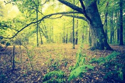 Poster Weinlesefoto der herbstlichen Waldlandschaft