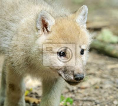 Weiß Wolf im Wald
