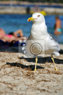 Weißer Vogel auf dem Strand
