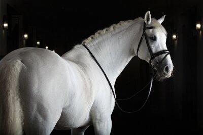 Poster Weißes Pferd auf schwarzem Hintergrund