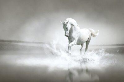 Poster Weißes Pferd durch Wasser