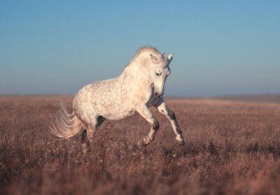 Poster Weißes Pferd laufen