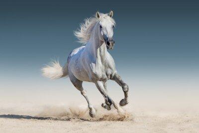 Poster Weißes Pferd laufen Galopp