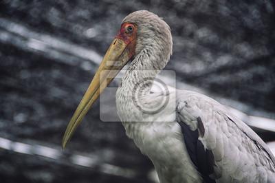 Weißhand Storch im Vogelpark Kuala Lumpur, Malaysia
