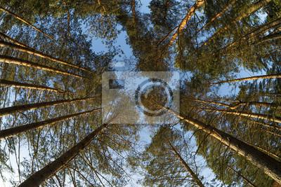 Weitblick bis zu Pinienbäumen Tops
