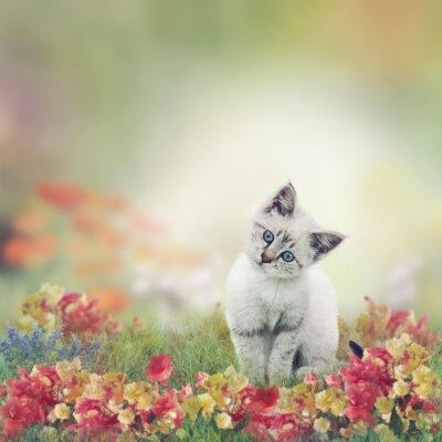 Poster White Kitten in Blumen