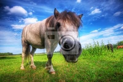 Wilde junge Pferd auf dem Feld