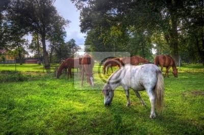 Wilde Pferde auf dem Feld