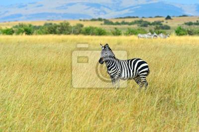 Wildebeest in der Savanne