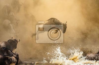 Wildebeest is jumping to the Mara River. Great Migration. Kenya. Tanzania. Maasai Mara National Park.