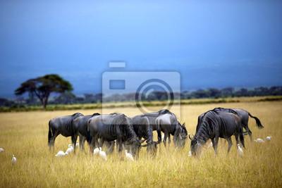 Wildebeestherde, Gnu auf Savanne. Masai Mara in Kenia
