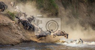 Wildebeests are crossing  Mara river. Great Migration. Kenya. Tanzania. Maasai Mara National Park.