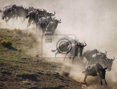 Wildebeests laufen durch die Savanne. Große Migration. Kenia. Tansania. Masai Mara Nationalpark. Eine ausgezeichnete Illustration.