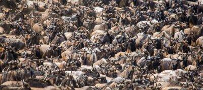 Wildebeests überqueren Mara Fluss. Große Migration. Kenia. Tansania. Masai Mara Nationalpark. Eine ausgezeichnete Illustration.
