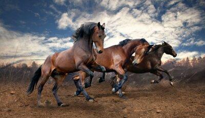 Poster wilden Sprung Bucht Pferde