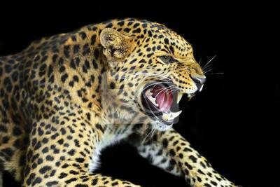 Wilder Leopard-