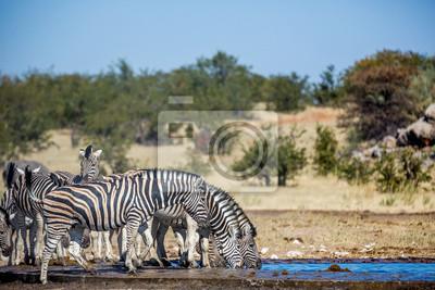 Wildlife at Etosha National Park, Namíbia