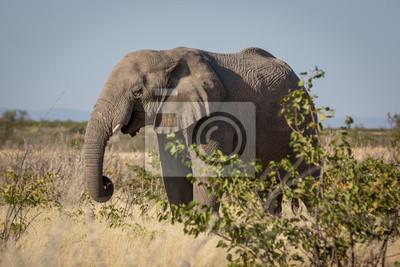Wildlife in Etosha National Park, Namibia