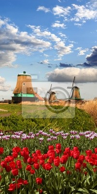 Windmühlen mit bunten Tulpen in Zaanse Schans, Amsterdam Bereich