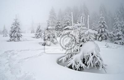 Winterlandschaft mit Nebel in den Karpaten, Ukraine