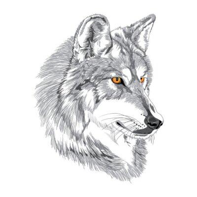 Poster Wolf Fang Skizze