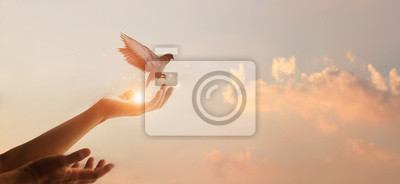 Poster Woman praying and free bird enjoying nature on sunset background, hope concept