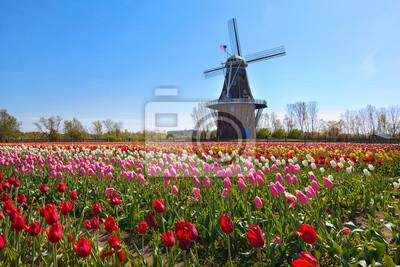 Poster Wooden Windmill in Holland Michigan - Umgeben von Frühling Tulpen