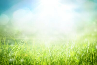 Poster World environment day concept: green grass and blue sky abstract background with bokeh