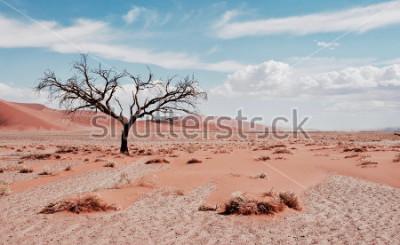 Poster Wüstenbaum