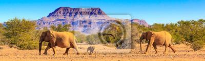 Poster Wüstenelefanten