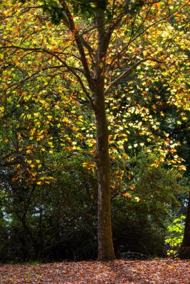 Yellow and brown autumn leaves